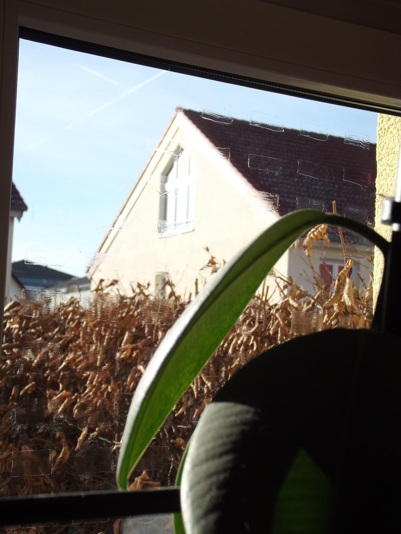 Vogelschutz-Filzstift, Muster am Fenster, außen